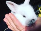Photos lapins