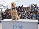 Palm dog festival de cannes