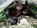 photo chat sieste soleil