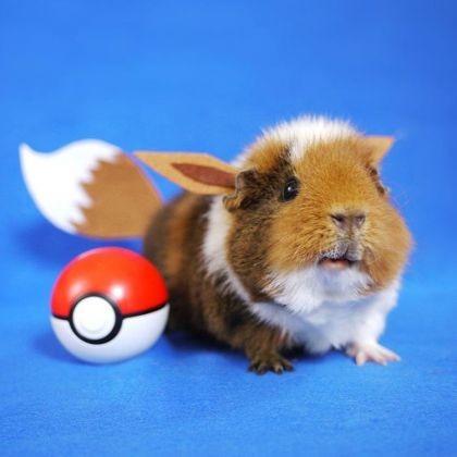 Quand fuzzberta devient un pok mon fuzzberta le - Cochon pokemon ...