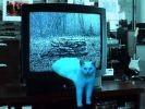 demi-chat détourné