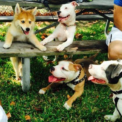 Mya copains chiens
