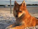 Mya chien célèbre