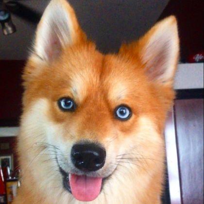 Mya yeux bleus