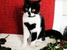 chat pelage coeur