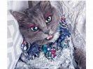 Pitzush aime les bijoux d'après sa maîtresse