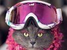 Pitzush part faire du ski