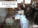lolcats chien lapin