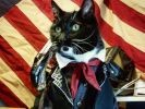 cosplay pour chats