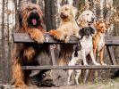 Les chiens aiment leurs amis et mordent leurs ennemis