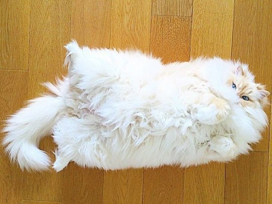 chat nuage