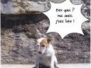 lolcats chien