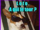 loldogs photo chien