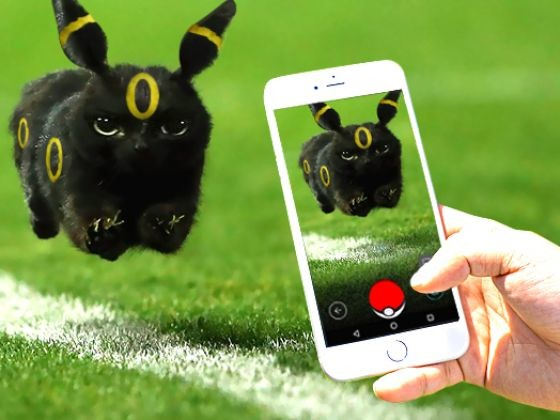 chat noir rugby