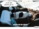 lolcats photo chiens
