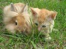 Ce lapin et ce chaton n'ont pas les mêmes parents, et pourtant...