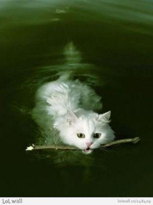 Ce chat a trouvé un beau bâton dans l'eau