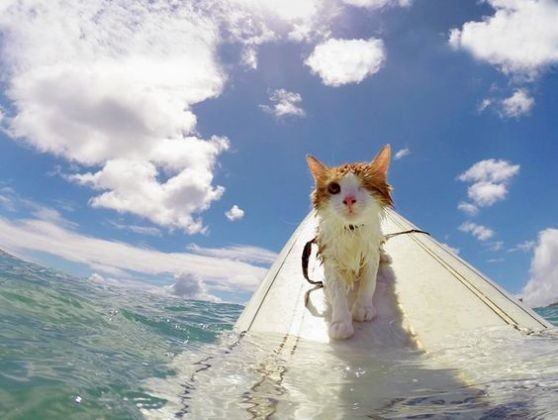 Chat surfeur