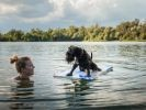 chiens qui adorent se rafraîchir dans l'eau