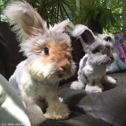 Wally le lapin et sa nouvelle amie