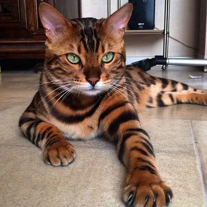 7 chats stars du Web qui règnent aussi sur Wamiz