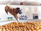 exposition pour chien