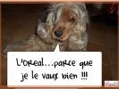 photo chien loldogs
