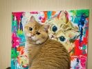 Hosico le chat star d'Instagram