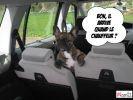 photo chien voiture loldogs