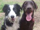 Skye et Koda, les deux chiens heureux d'Instagram