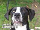 photo chien loldog