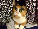 chat sosie Cara Delevingne