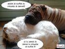 photo chien loldogs