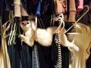 21 chats drôles de positions