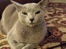 21 chats qui sourient