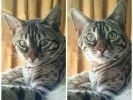 20 chiens et chats avant/après surnom