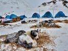 La nuit, les chiens et les mushers dorment en bivouac