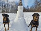Manny et ses amis Rottweiler
