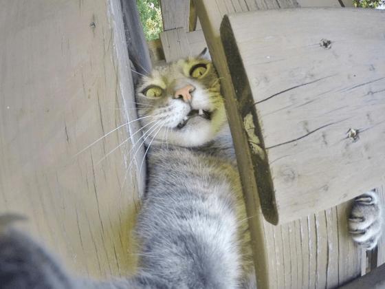 Prêt à tout pour prendre un selfie