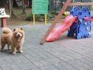 Chowder au parc