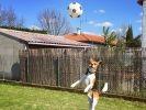 MJ le Beagle sportif Wamiz Run