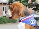 MJ le Beagle sportif Wamiz Run