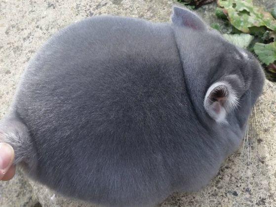 Une grosse boule de poils