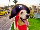 Chien pirate