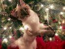 20 chats qui vivent une première fois