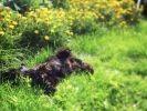 9. Et on se roule dans l'herbe !
