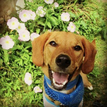 11. Un chien heureux