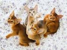 chatons trop mignons