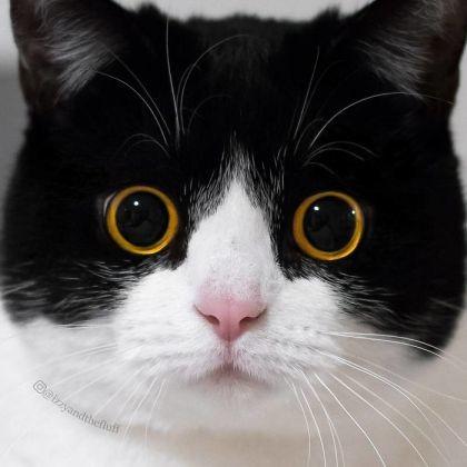 De si beaux yeux