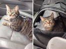 9. Quand ton chat réalise que vous allez chez le vétérinaire